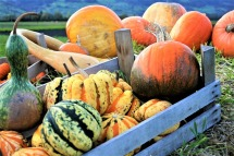 ornamental-pumpkins-2889601_640