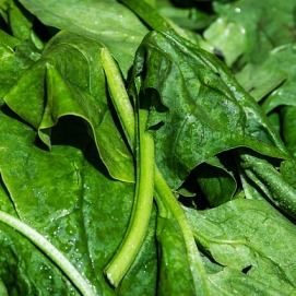 spinach-3463248_640